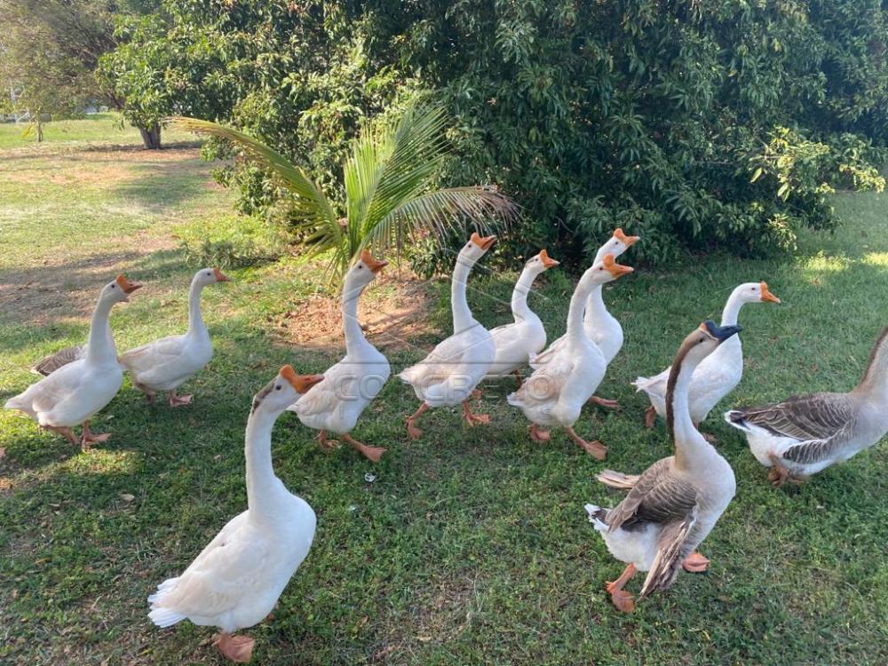 Comprar Rural / Chácara / Fazenda em Duartina apenas R$ 13.000.000,00 - Foto 10