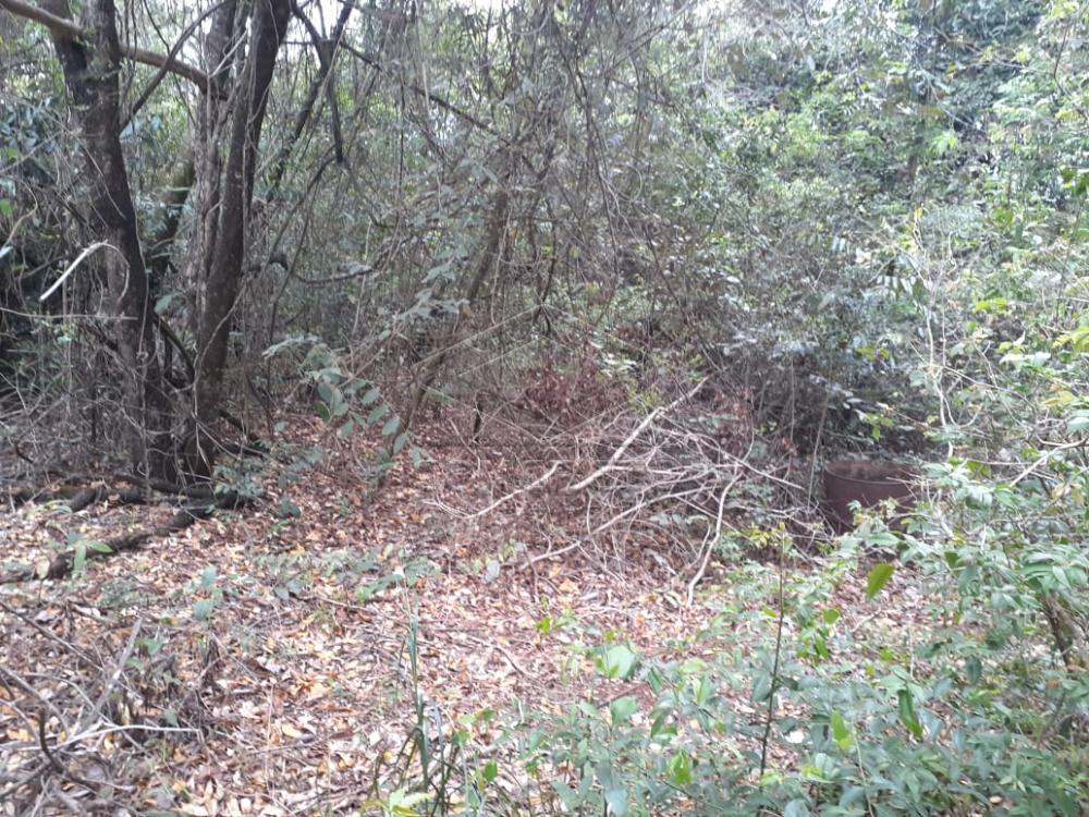 Comprar Terreno / Padrão em Bauru R$ 80.000,00 - Foto 7